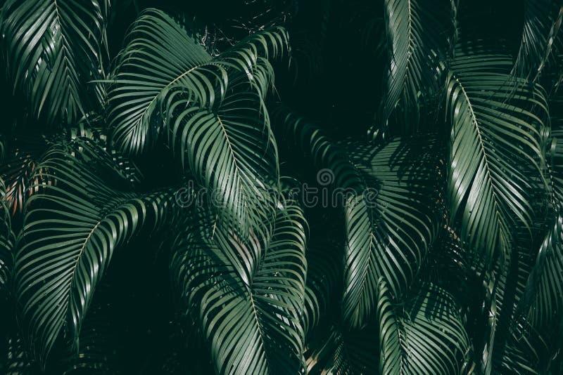 Jardín vertical con la hoja verde tropical fotos de archivo libres de regalías