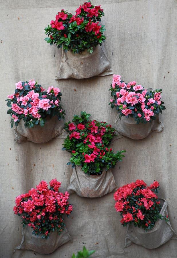 Jardín vertical de la tela fotos de archivo libres de regalías