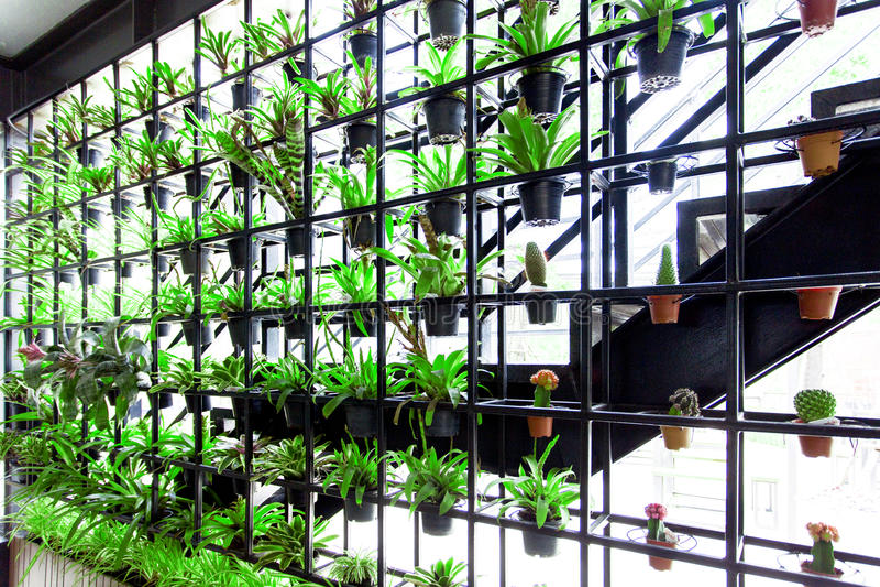 Jardín vertical verde El jardín tiene mucho ejecución de la planta verde en el marco de acero Puede ahorrar energía y reducir la  fotos de archivo