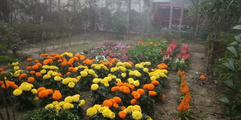 Jard?n de flores natural foto de archivo