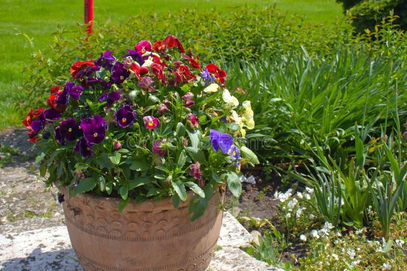 Jard?n en yarda del castillo de Wawel con las flores hermosas y castillo en el fondo imagen de archivo libre de regalías