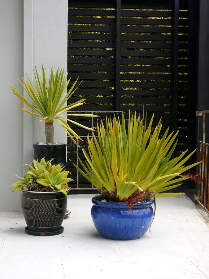 Jard?n modernista: plantas potted subtropicales foto de archivo libre de regalías