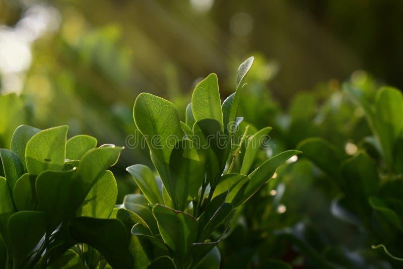 Jard?n y flores verdes en el jard?n imágenes de archivo libres de regalías