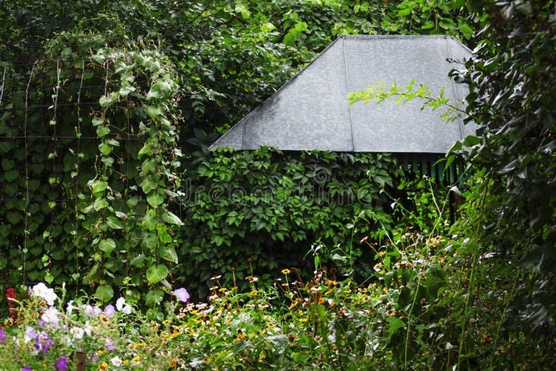 Jarda bonita da casa de campo com o caramanchão, coberto de vegetação com as ervas verdes imagem de stock