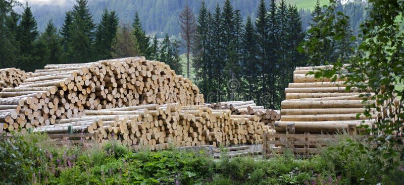 Jarda da madeira de uma serração fotos de stock