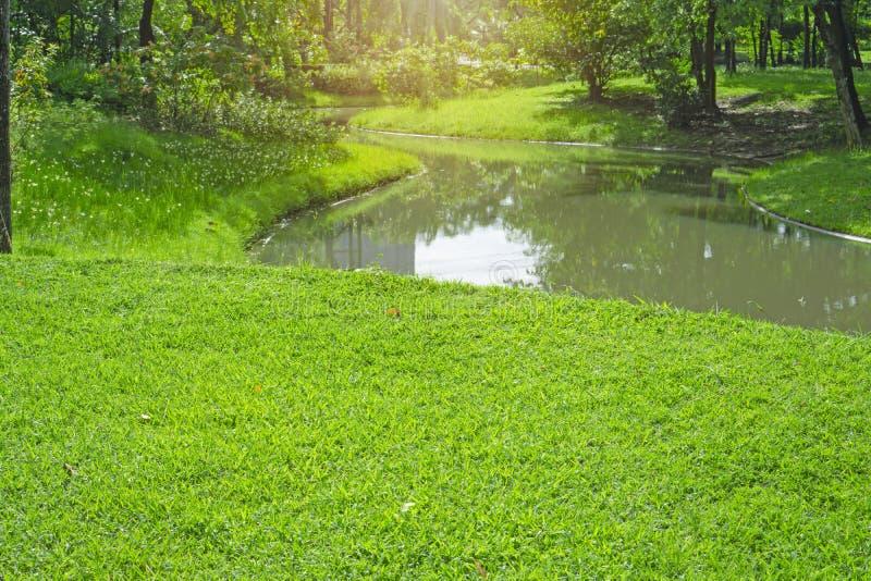 Jarda verde fresca da grama de tapete, gramado liso em um jardim bonito e bom cuidado que ajardina, ao lado de um lago longo e da fotos de stock