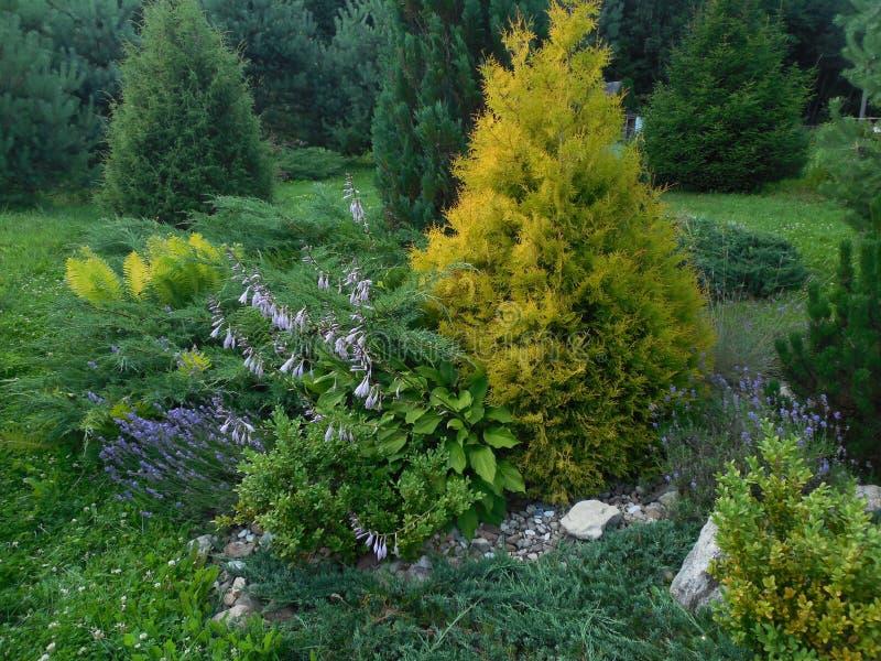 Jardim ajardinado imagem de stock royalty free