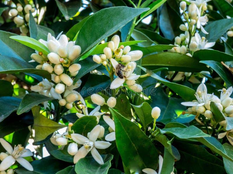 Jardim alaranjado da flor na primavera imagem de stock royalty free