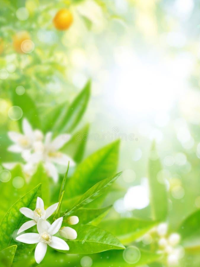 Jardim alaranjado no fundo borrado flor fotos de stock royalty free