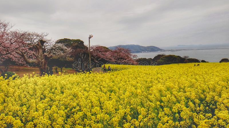 Jardim amarelo fotografia de stock