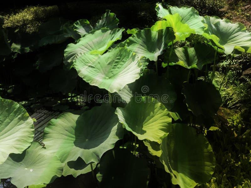 Jardim aquático, planta aquática imagens de stock royalty free