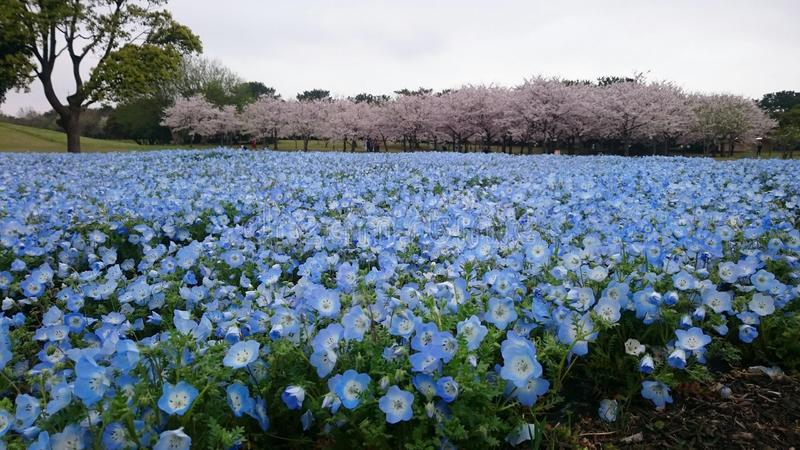 Jardim azul fotografia de stock royalty free