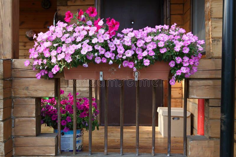Jardim bonito com as plantas da caixa e de potenciômetro da flor no patamar fotografia de stock royalty free