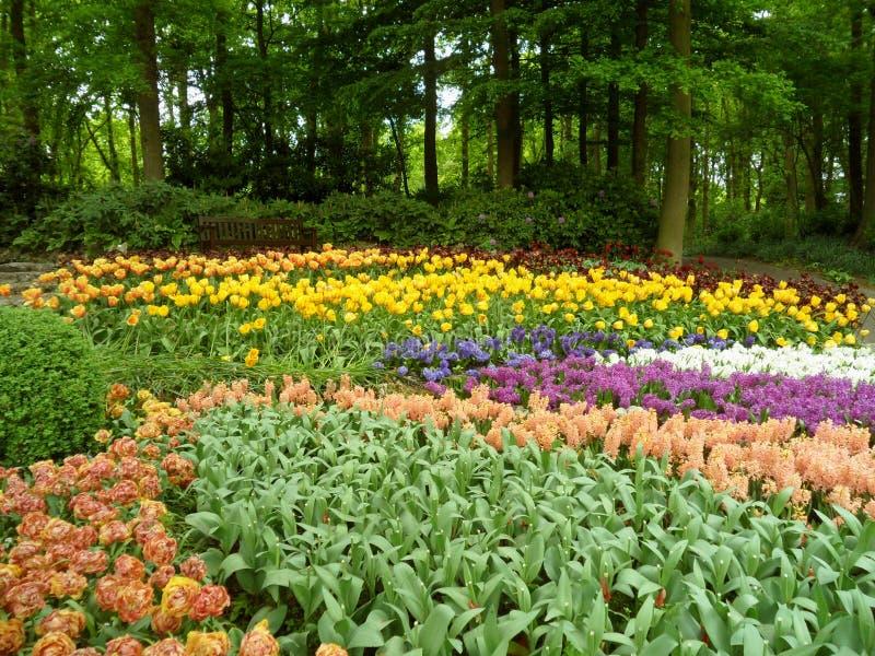 Jardim bonito da mola com as flores de florescência da Multi-cor fotografia de stock