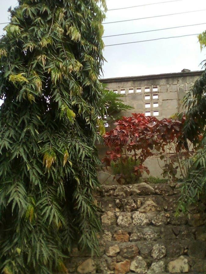 Jardim bonito disponível em meu lugar da casa em Tanzânia imagens de stock