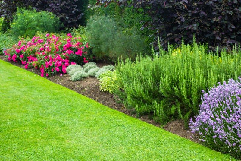 Jardim bonito, do verão com rosas vermelhas e várias plantas imagem de stock