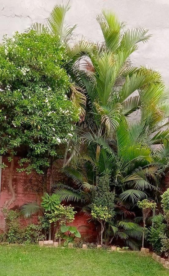 Jardim bonito indiano fotos de stock
