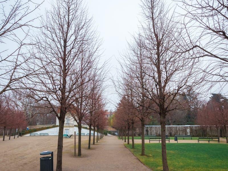 Jardim bonito na grama verde da árvore da estação do inverno fotografia de stock