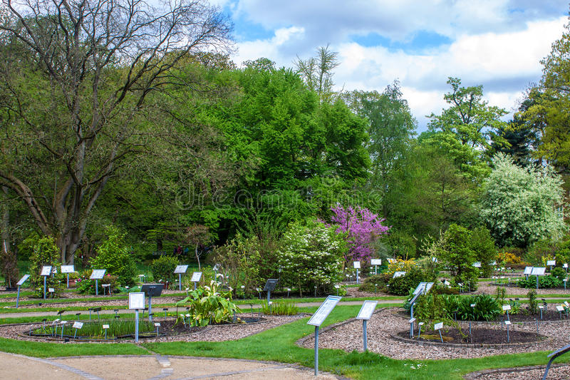 Jardim botânico fotos de stock