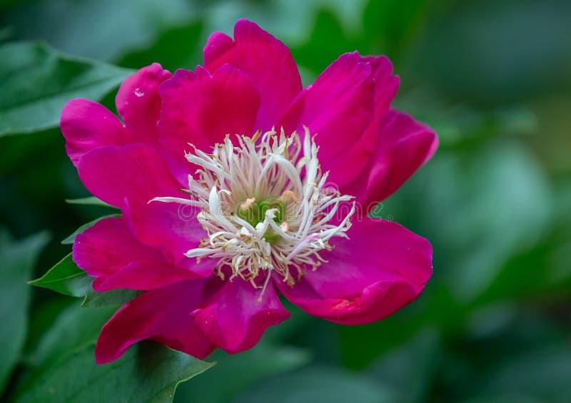 Jardim botânico Anchorage, Alaska imagens de stock
