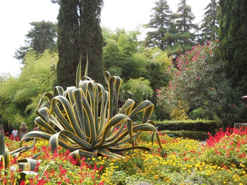 Jardim botânico bonito em Sochi imagens de stock royalty free