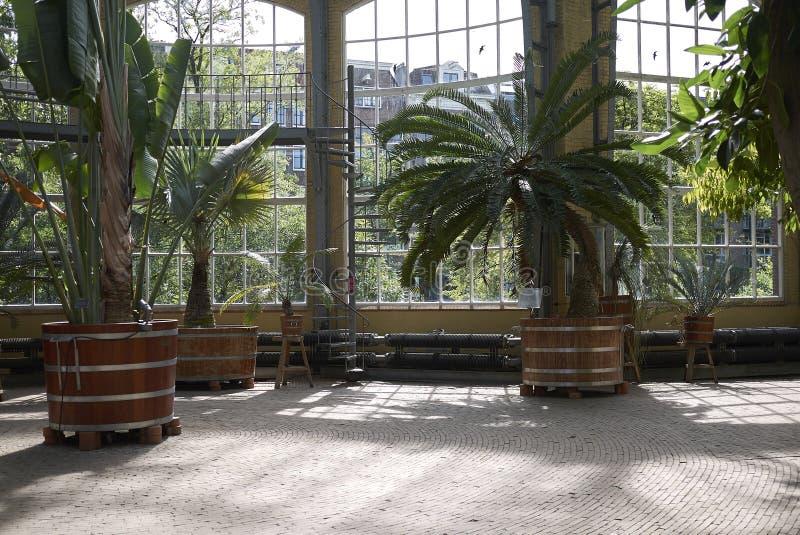 Jardim botânico de Amsterdão fotos de stock