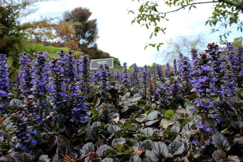 Jardim botânico de Auckland fotos de stock