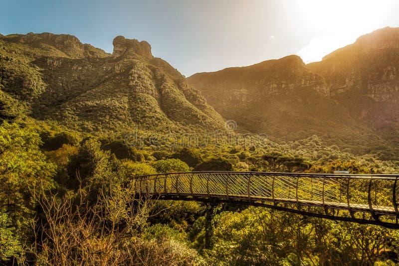 Jardim botânico de Cape Town imagens de stock