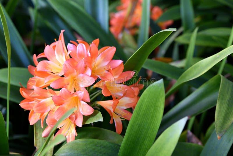 Jardim botânico de Madeira fotos de stock royalty free
