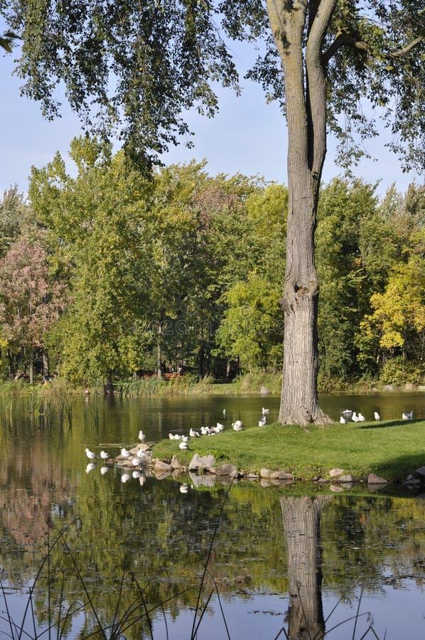 Jardim botânico de Montreal imagem de stock
