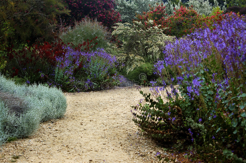 Jardim botânico de San Francisco foto de stock