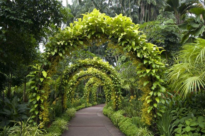 Jardim botânico de singapore do caminho fotos de stock