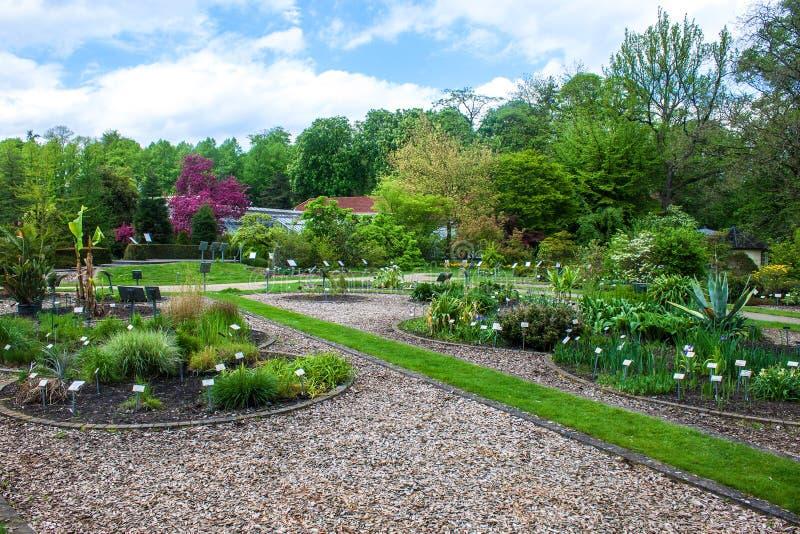 Jardim botânico em Muenster fotografia de stock