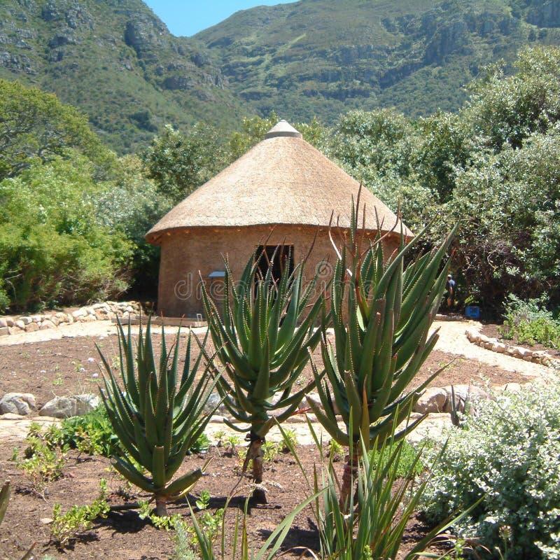 Jardim botânico na cidade do cabo fotos de stock royalty free