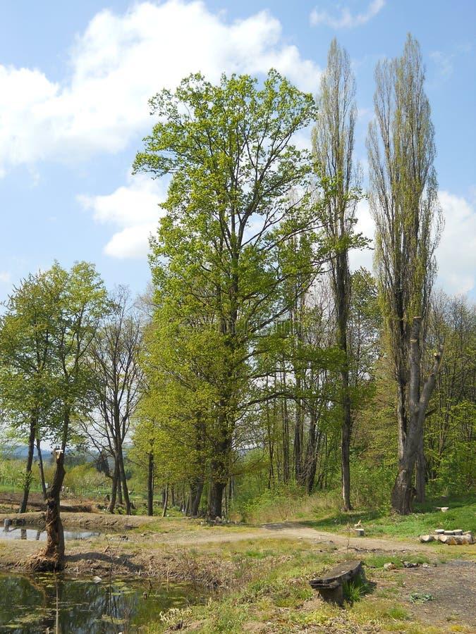 Jardim botânico no awice do 'de WojsÅ do arboreto fotos de stock