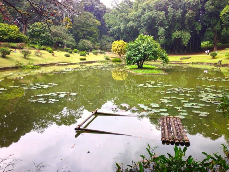 Jardim botânico real, lago no parque imagem de stock royalty free
