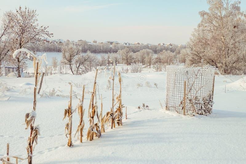 Jardim coberto de neve do inverno fotografia de stock royalty free