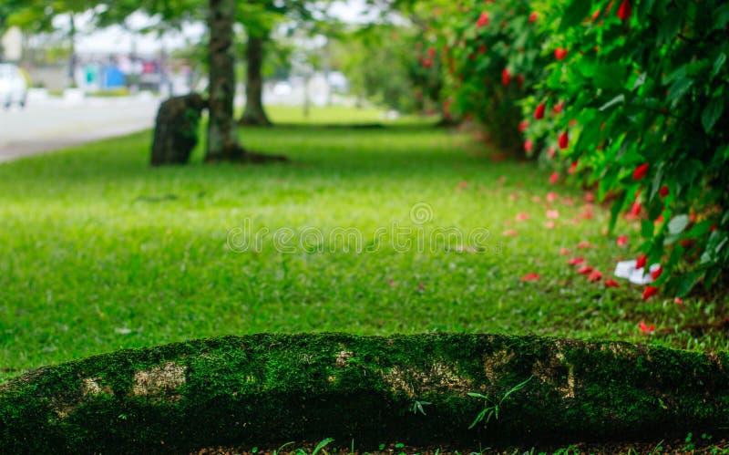 Jardim colorido imagens de stock royalty free