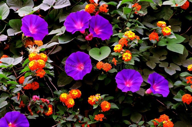 Jardim colorido imagens de stock