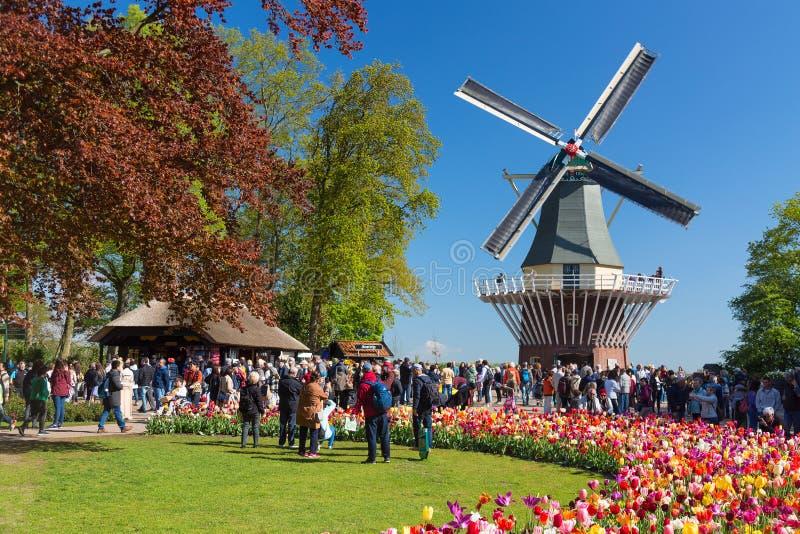 Jardim colorido de florescência Keukenhof do canteiro de flores das tulipas em público com moinho de vento Local turístico popula imagens de stock royalty free