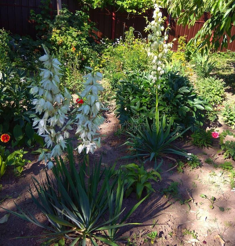 Jardim com as flores caseiros perto das árvores de fruto imagem de stock