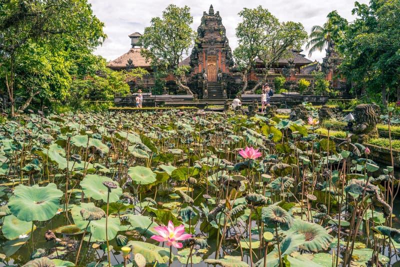 Jardim com as flores de l?tus sagrados de floresc?ncia na frente de Lotus Saraswati Temple em Ubud, Bali imagem de stock