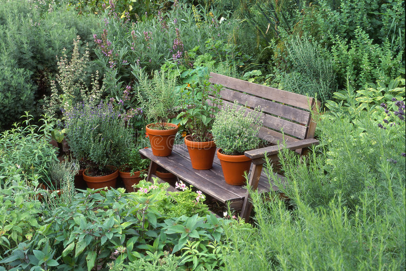Jardim com ervas foto de stock