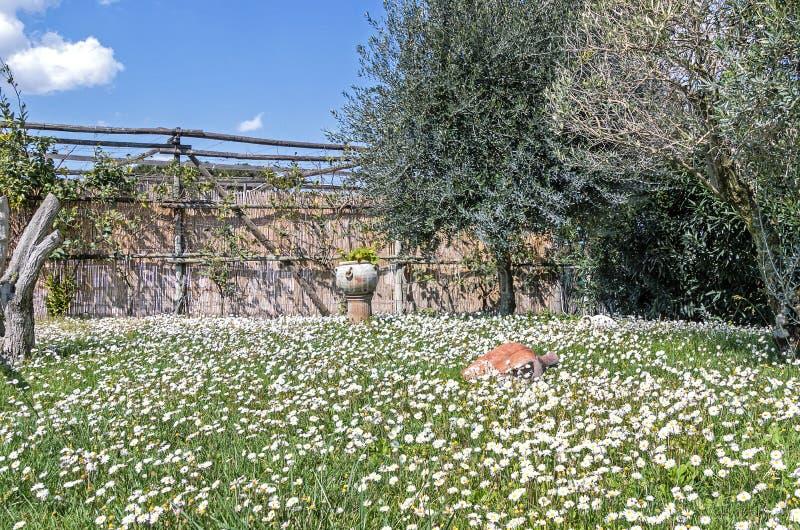 Jardim com prado e oliveiras da margarida imagens de stock