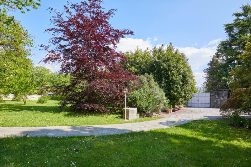 Jardim com prado verde, árvore de faia vermelha e o trajeto telhado de pedra em um dia de verão, Itália fotos de stock royalty free