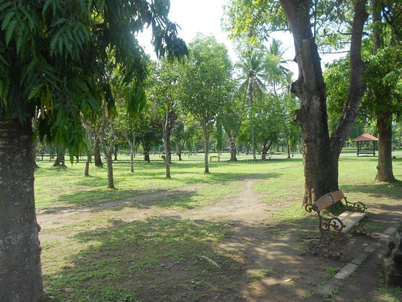 Jardim como a floresta com um banco fotos de stock royalty free