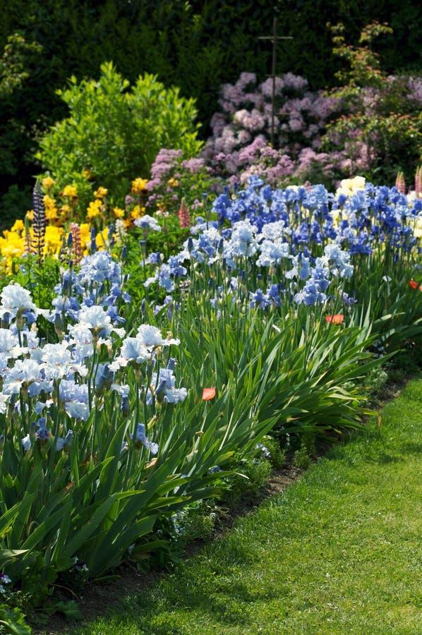 Jardim completamente das íris foto de stock royalty free