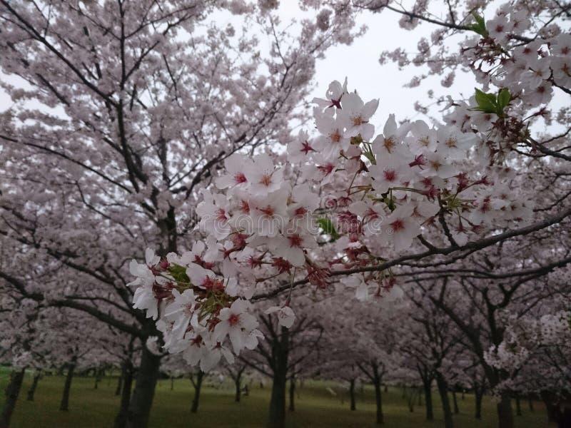 Jardim cor-de-rosa fotos de stock