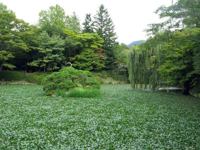 Jardim coreano foto de stock royalty free