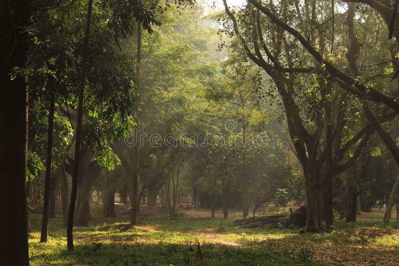 Jardim da árvore no parque de Cubbon na Índia de Bangalore foto de stock